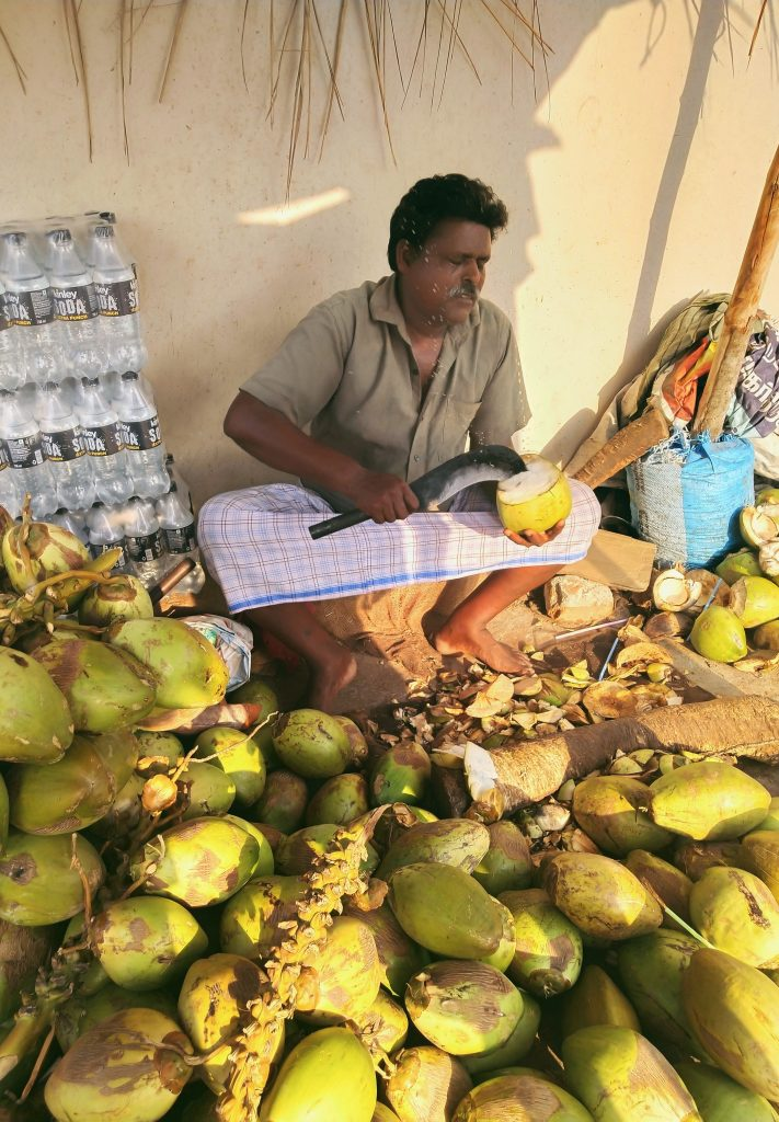 Coconuts stand in Pondicherry