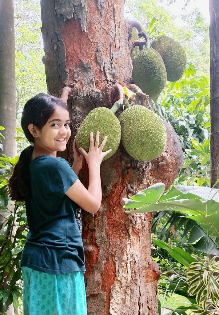 Best fruits in Asia jackfruits