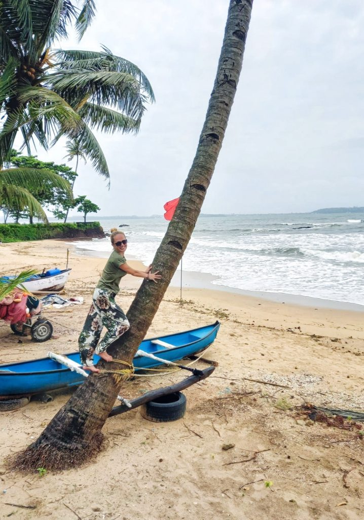Go Goa: ten practical things you need to know, coconut trees